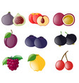different types of tropical fruits vector image vector image