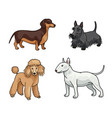 dogs different breeds in color set5 vector image