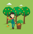 farmer collecting oranges vector image vector image