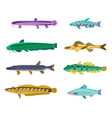 rainbow trout and cirrhitops vector image vector image