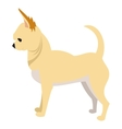 Chihuahua dog breed vector image vector image