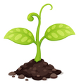 Plant vector | Price: 1 Credit (USD $1)