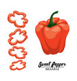 cartoon sweet pepper ripe red vegetable vector image