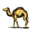 color line sketch a camel vector image vector image