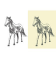hand drawn sketch a horse vector image