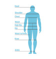 man size chart human front side silhouette vector image vector image