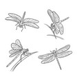 set different dragonflies in outlines vector image