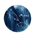 the taurus zodiac constellation vector image vector image