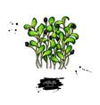alfalfa sprouts heap drawing kai wah-rei vector image vector image