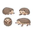 cute hedgehogs vector image vector image