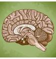 engraving human brain retro vector image vector image