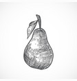 pear with leaf hand drawn vector image