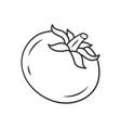tomato linear icon vector image vector image