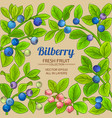 bilberry branches frame on color background vector image