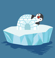 cute penguin with igloo ice house vector image vector image