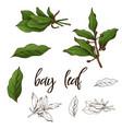 detailed retro image of bay leaf ink sketch vector image