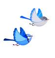 flying splendid fairy wren pair isolated vector image vector image