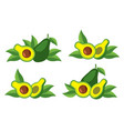 icon of the avocado vector image