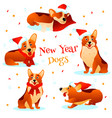 new year dogs vector image vector image