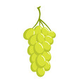 sultana grape icon cartoon style vector image vector image