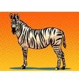 African Zebra animal vector image