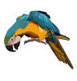 colorful tropical parrot vector image vector image