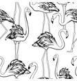 exotic flamingos flamboyance group gathering vector image vector image