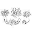line art set peonies flowers vector image