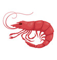 shrimp pink icon boiled healthy seafood vector image vector image