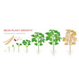 Bean plant growth stages infographic elements in