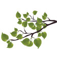 branch of a tree with green leaves vector image vector image