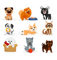 cute doggy set isolated playful dog puppies vector image