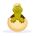 cute plump turtle that smiles just hatched from vector image vector image