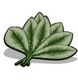 fan green leaves isolated on white vector image vector image