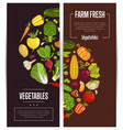 fresh vegetable farming flyers set vector image