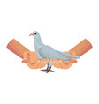 hands holding dove vector image