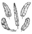 set bird feather sketch isolated wing pen vector image vector image