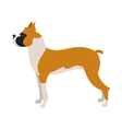 Boxer dog breed vector image vector image