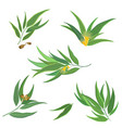 collection of eucalyptus leaves flowers vector image