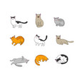 Cute cartoon cats of different breeds happy pets