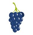dark grape icon cartoon style vector image vector image