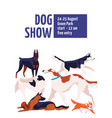 different dog breeds at conformation show placard vector image vector image