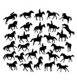 Equestrian Sport and Horse Activity Silhouettes vector image vector image