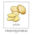 hand drawn of isolated potatoes vector image