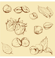 Set of highly detailed hand drawn hazelnuts vector image