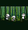 cute three pandas in bamboo forest vector image vector image