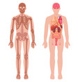 human anatomy set vector image vector image