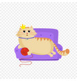 princess cat lying on the sofa with red ball in vector image vector image