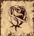 Vintage rose bud sketch