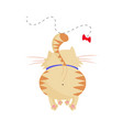 cute cartoon ginger cat playing with butterfly vector image vector image